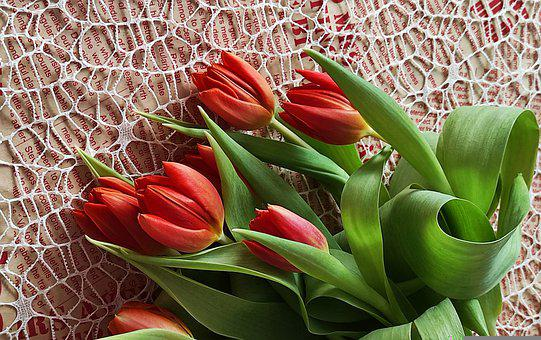 Tulips, Flowers, Bouquet, Bunch, Spring, Red Tulips