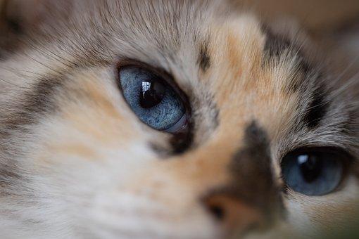 Cat, Pet, Face, Muzzle, Head, Eyes, Animal