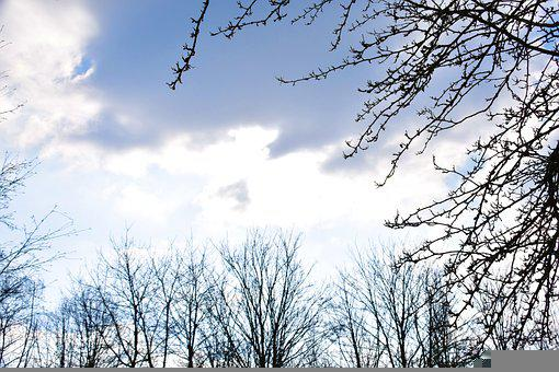 Trees, Sky, Clouds, Atmosphere, Cumulus, Cloudy