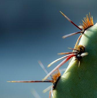 Cactus, Thorns, Plant, Spines, Prickly, Desert Plant