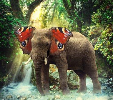 Elephant, Butterfly, Photo Manipulation, Fantasy