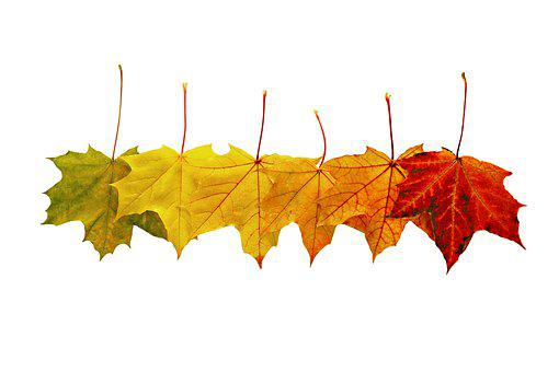 Leaves, Foliage, Autumn, Bright, Colorful, Fall, Maple