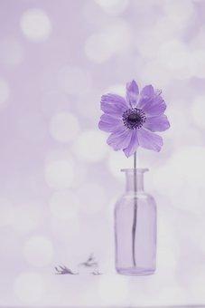 Anemone, Flower, Vase, Petals, Bloom, Blossom, Plant