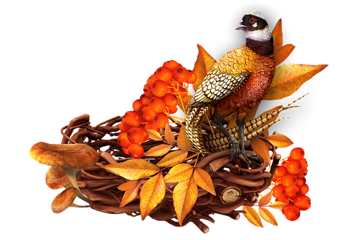 Bird, Leaves, Foliage, Jack, Pheasant, Berry