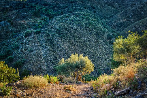 Trail, Mountain, Landscape, Path, Gravel Road
