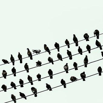 Birds, Wires, Perched, Animals, Feathers, Plumage