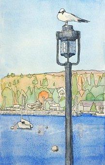 Seagull, Bird, Lamp Post, Perched, Lake, Bay, Sea