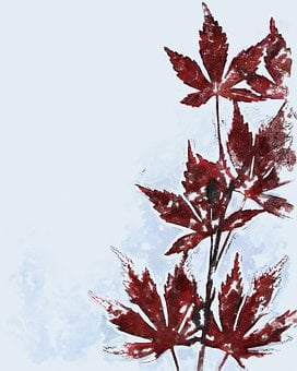 Maple, Leaves, Photo Art, Branch, Red Leaves, Foliage