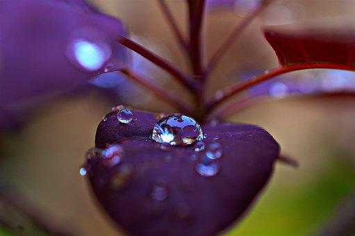 Dew, Leaf, Plant, Raindrops, Droplets, Reflection