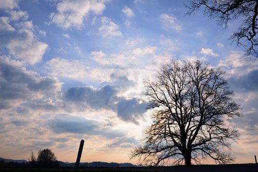 Tree, Clouds, Sky, Silhouette, Sunset, Sunlight