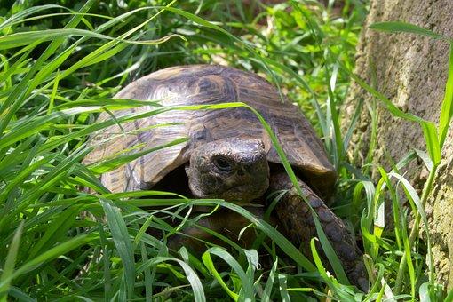Turtle, Nature, Turtles, Turtle Earth