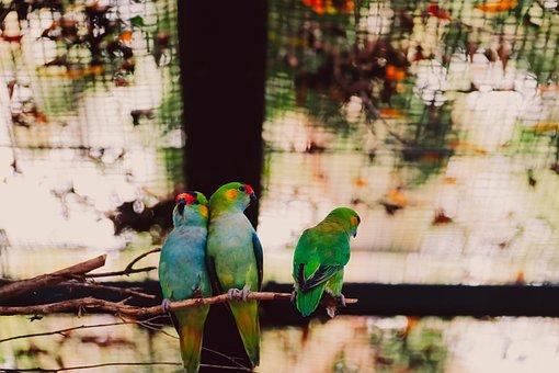 Parrot, Birds, Zoo, Perched, Animals, Wildlife, Beak