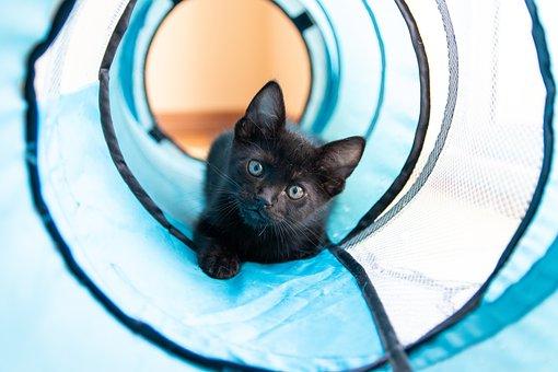 Cat, Kitten, Pet, Black Cat, Play, Whiskers, Kitty