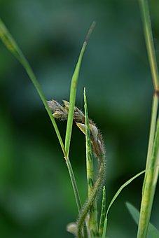 Grass, Halm, Close Up, Blade Of Grass