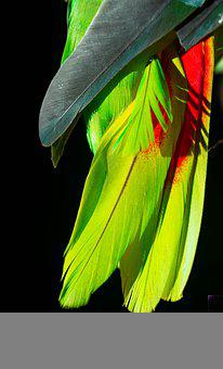 Aves, Nature, Plumage, Animal, Feathers, Feather, Birds