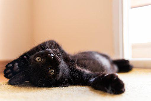 Cat, Feline, Hairy, Animal, Mammal, Beautiful, Adorable