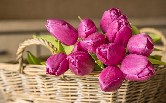 Tulips, Flowers, Basket, Bunch, Bloom, Blossom