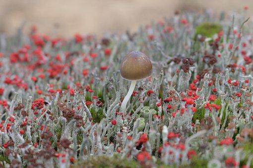 Mosses, Mushroom, Macro, Wild Mushroom, Spore, Sponge