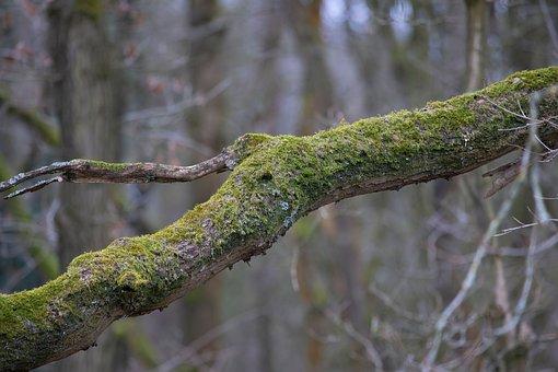 Branch, Tree, Moss, Green, Lichen