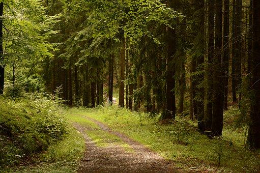 Forest, Green, Nature, Plant, Leaves, Landscape, Sun