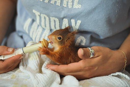 Squirrel, Young Animal, Feeding, Foundling, Saved, Feed