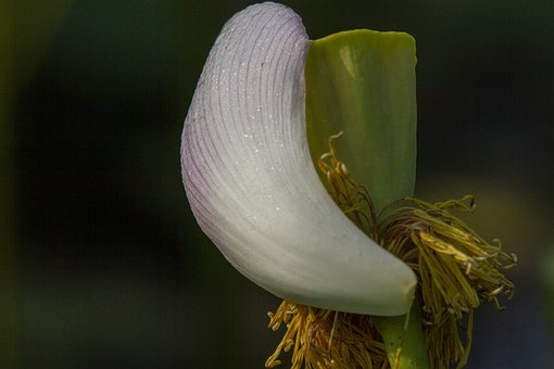 Lotus, The Moment Of Dying, The Lotus, The Last Leaf