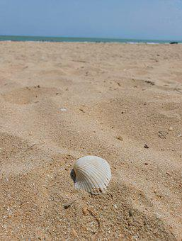 Sea, Water, In The Sand, Beach, Azure, Shell, Clams