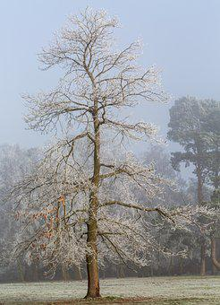 Tree, Winter, Snow, Nature, Landscape, Cold, Wintry