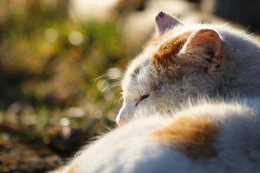 Cat, Animal, Sleeping, Asleep, Sleep, Tomcat