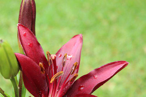 Flower, Spring, Rain Shower, Dew, Water Drop, Bloom