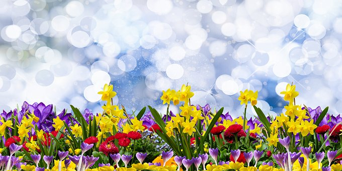 Nature, Flowers, Background, Spring, Daffodils, Crocus