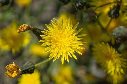 Daisy, Yellow, Flowers, Garden, Bloom, Nature, Spring