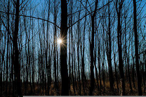 Forest, Trees, Sunlight, Silhouette, Sunbeam, Light