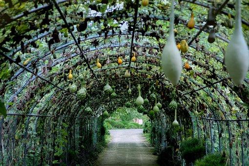 Tunnel, Gourds, Vegetables, Garden, Plants