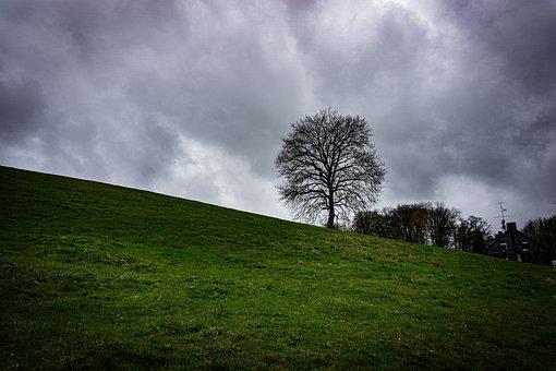 Tree, Sky, Hill, Meadow, Field, Grass, Grasslands