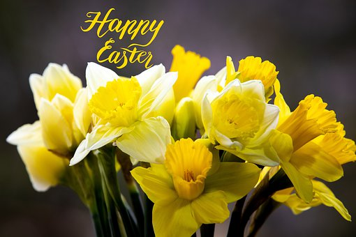 Daffodils, Easter, Greeting, Flowers, Yellow Flowers