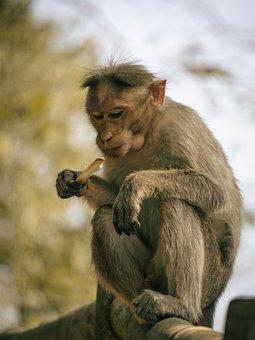 Icecream, India, Food, Monkey, Funny, Animals