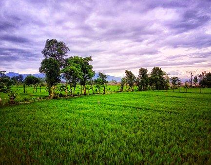 Rice Field, Lombok Island, Indonesia, Green