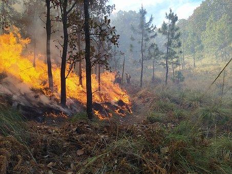 Forest, Firefighter, Fire, Firefighting, Safe, Risk