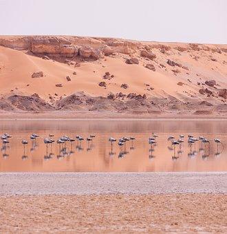 Flamingos, Water, Sand, Dunes, Flock, Flock Of Birds