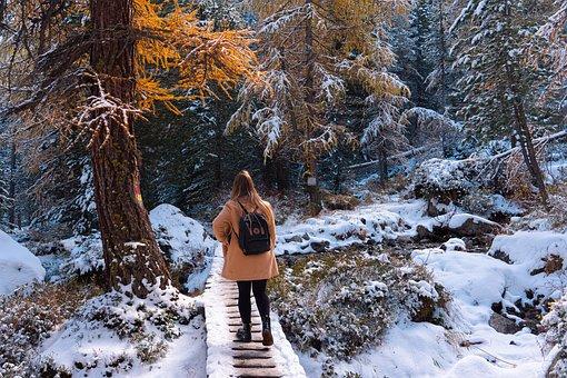 Forest, Winter, Walk, Woman, Traveler, Adventure