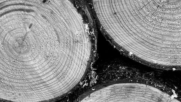 Wood, Fir, Nature, Tree, Texture, Heating, Logs