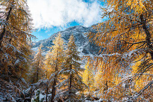 Trees, Mountain, Snow, Winter, Firs, Frost, Snowy