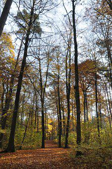 Autumn, Forest, Trees, White Oak, Red Oak, Sycamore