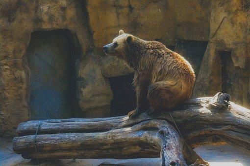 Bear, Animal, Zoo, Brown Bear, Mammal, Wildlife, Sad