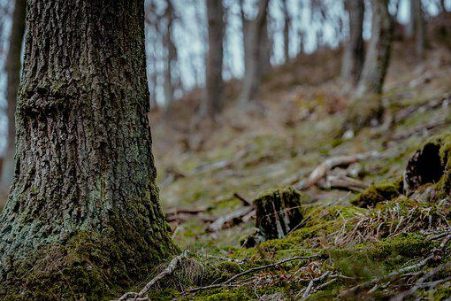 Log, Forest, Tree, Wood, Nature, Autumn, Tree Trunks