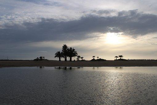 Sunset, Beach, Palms, Silhouette, Shadow, Reflection