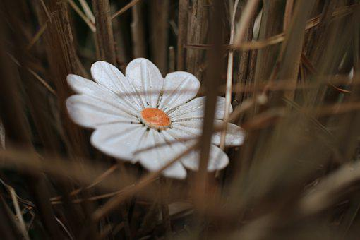 Flower, Bloom, Nature, Blossom, Plant, Spring, Garden