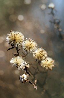 Blotter, Grass, Field, Forest, Plant, Nature, Drought