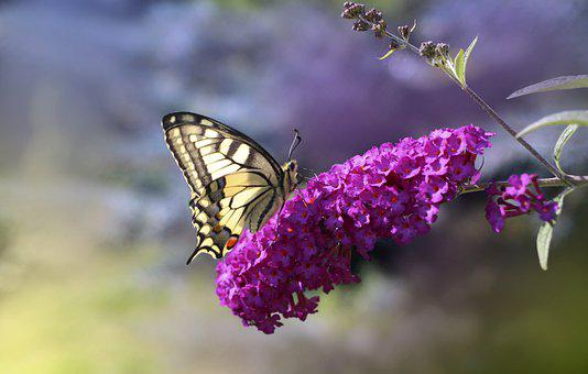 Butterfly, Insect, Nature, Flowers, Fauna, Flora